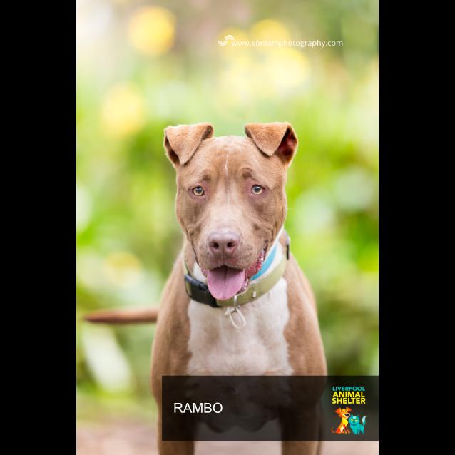 Photo of Rambo