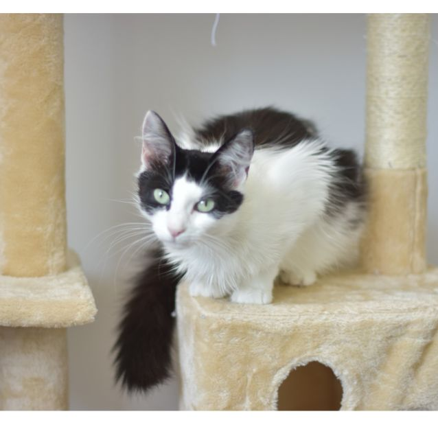Photo of Cassia ***2nd Chance Cat Rescue***