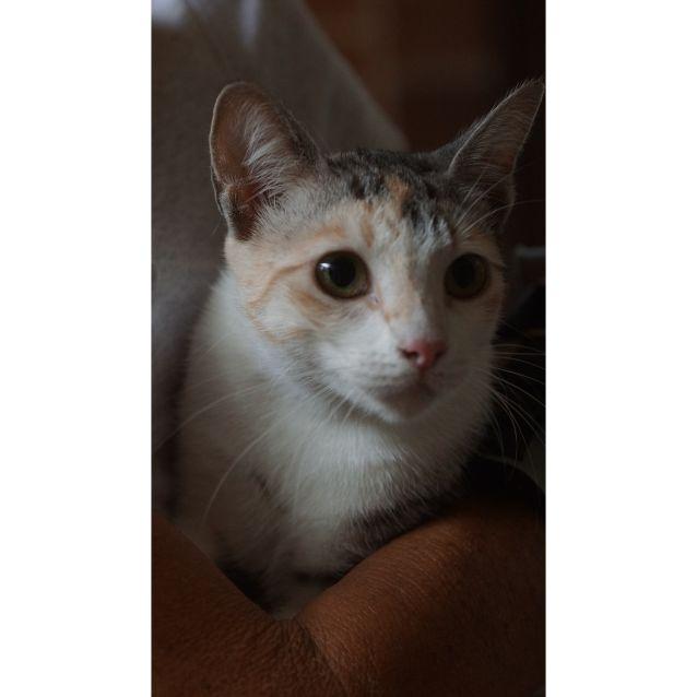 Photo of Cleo Lane