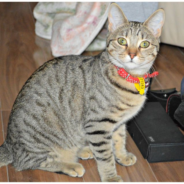 Photo of Tigi (To Be Adopted With Minnie)