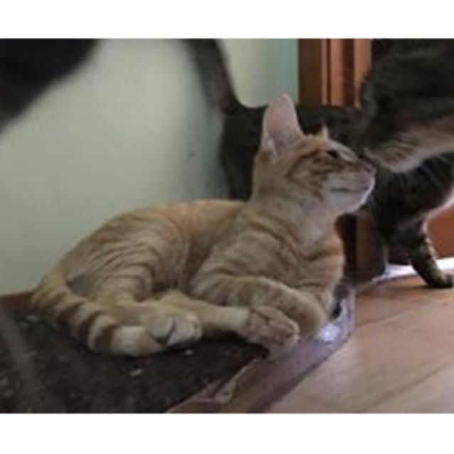 Photo of Wren **2nd Chance Cat Rescue**