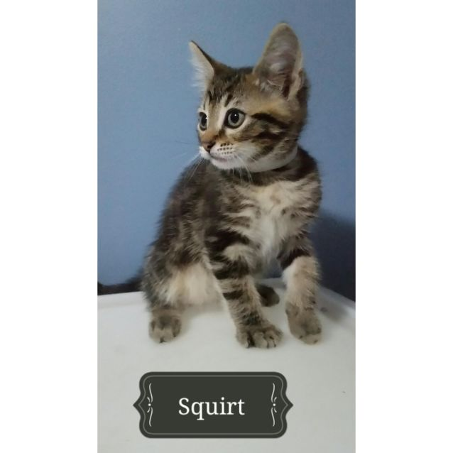 Photo of Squirt