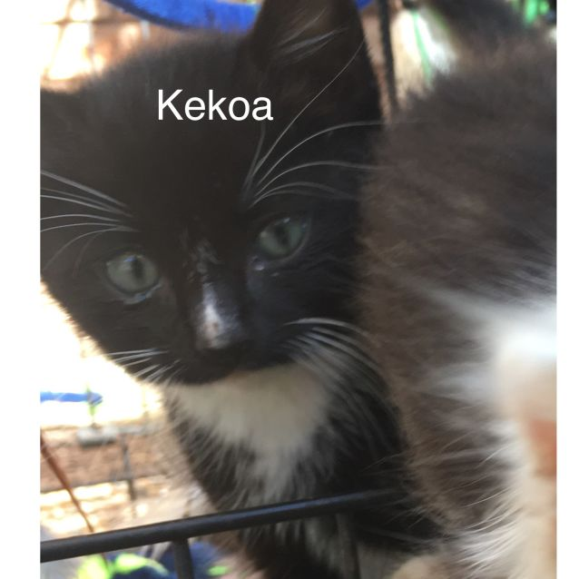 Photo of Kekoa