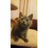 Photo of Kai