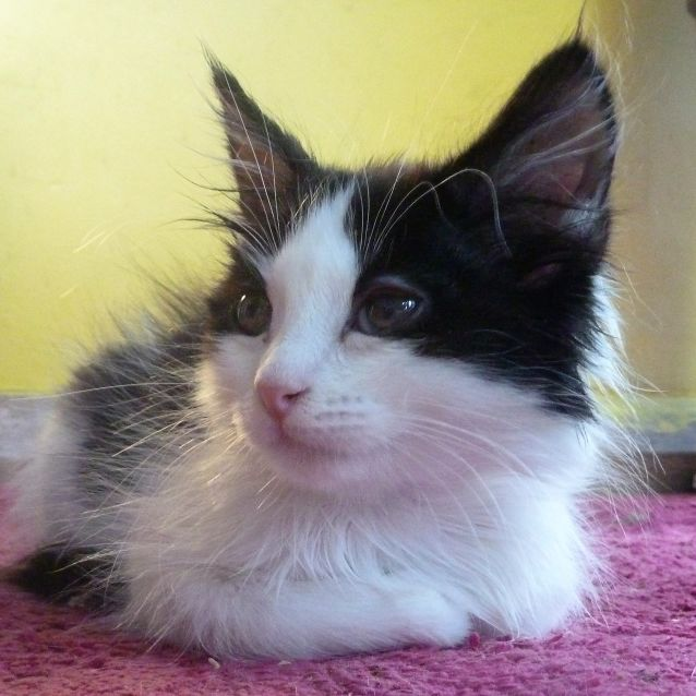 Photo of Basil Junior