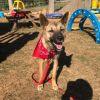 Photo of Gracie Dingo