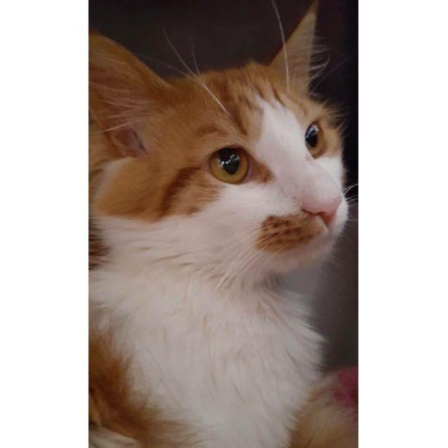 Photo of Callum