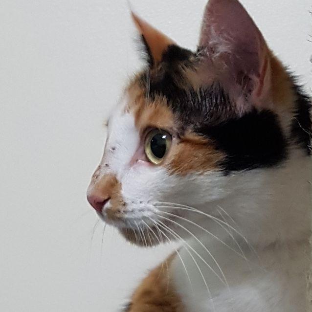 Photo of Millie Loves People!   Half Price Adoption