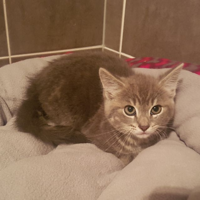 Photo of Bastian **2nd Chance Cat Rescue**