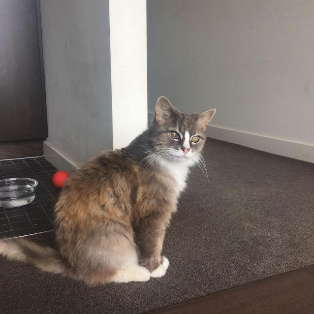 Photo of Lola (Located In East Melbourne)