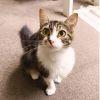 Photo of Cutie
