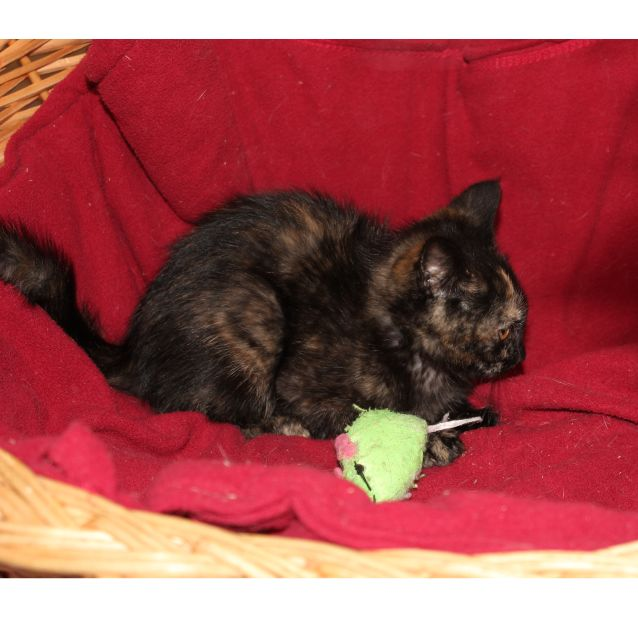 Photo of Anja **2nd Chance Cat Rescue**