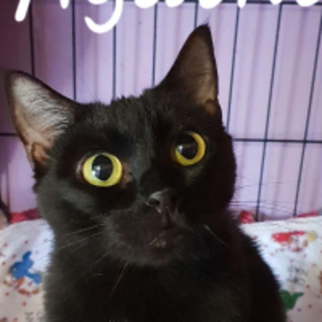 Photo of Agatha