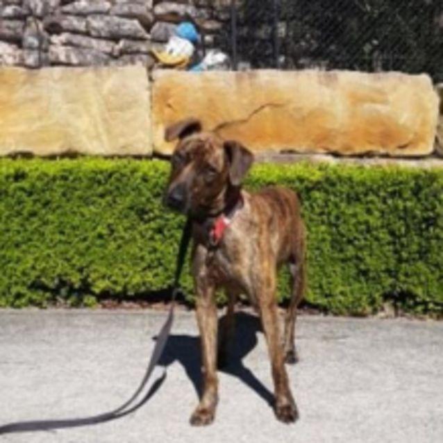 Photo of Bobby (Dog)