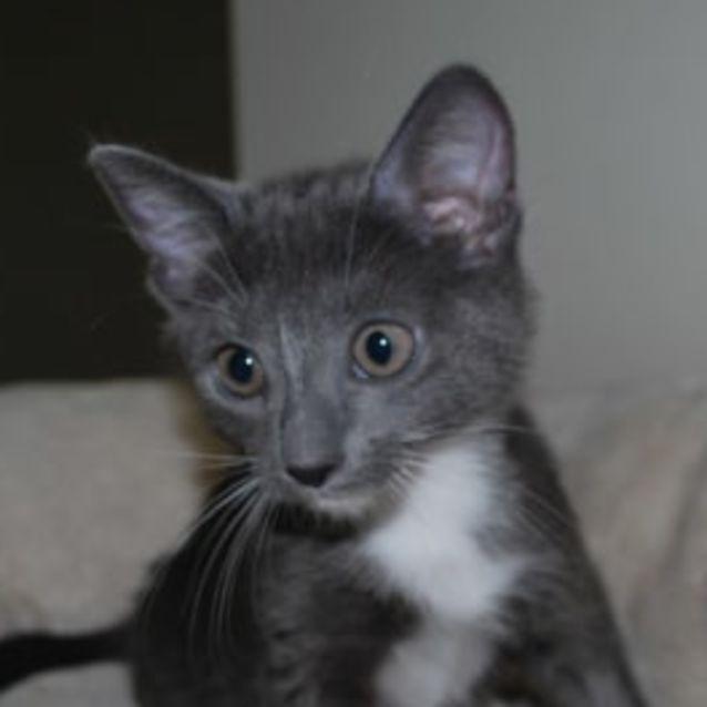 Photo of Sabastian