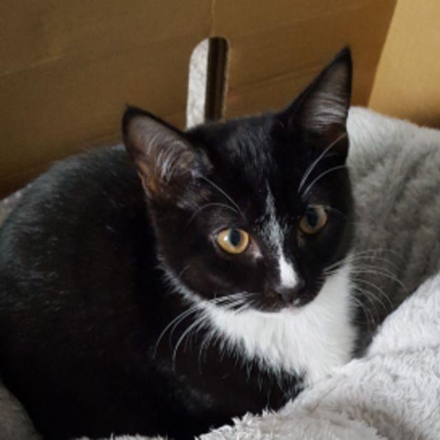 Photo of Dot ^^Dandy Cat Rescue^^