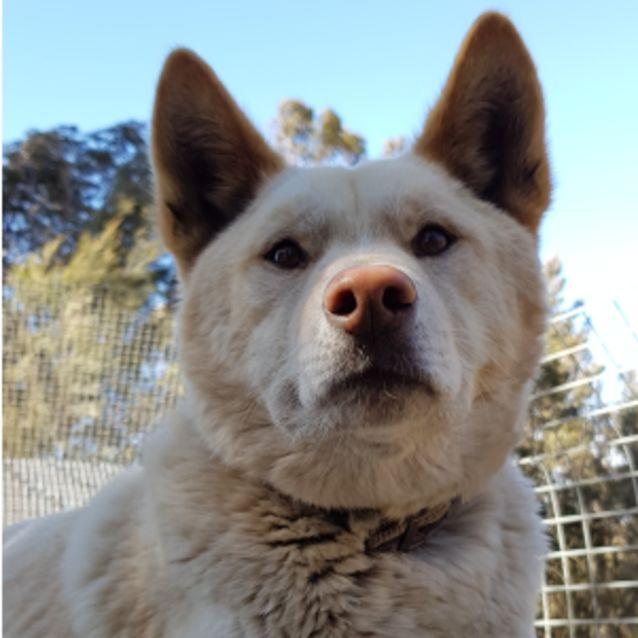 Photo of Winston  Dingo