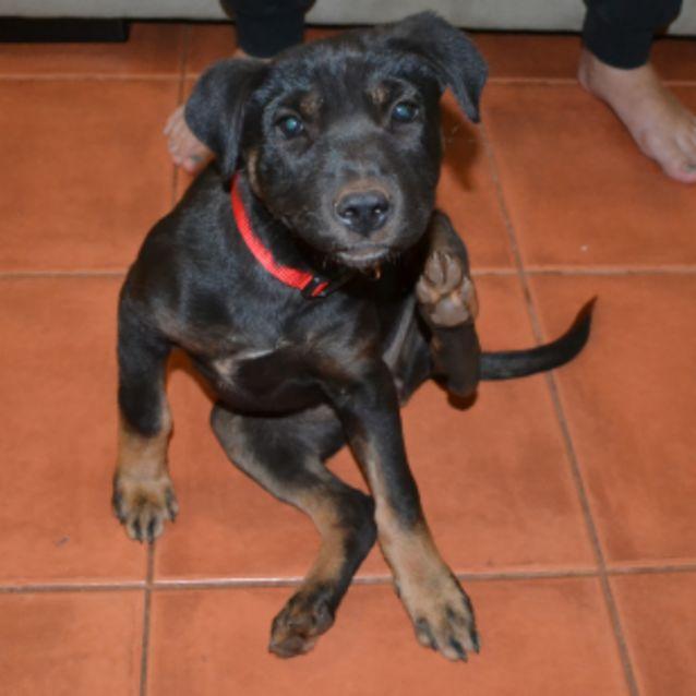 Photo of Luna   Nd732 *Adoption Pending