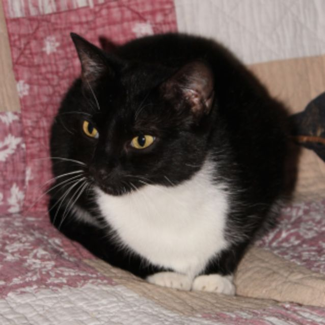 Photo of Zina **2nd Chance Cat Rescue**