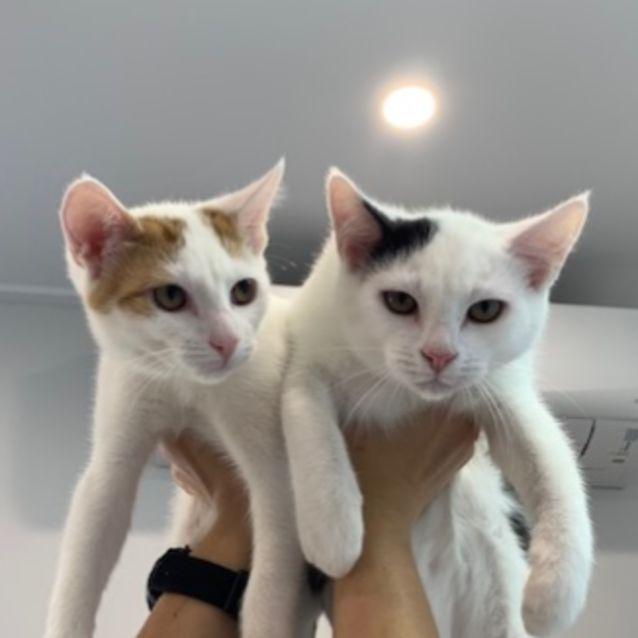 Photo of Simon And Theodore