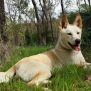 Photo of Tokai  Dingo
