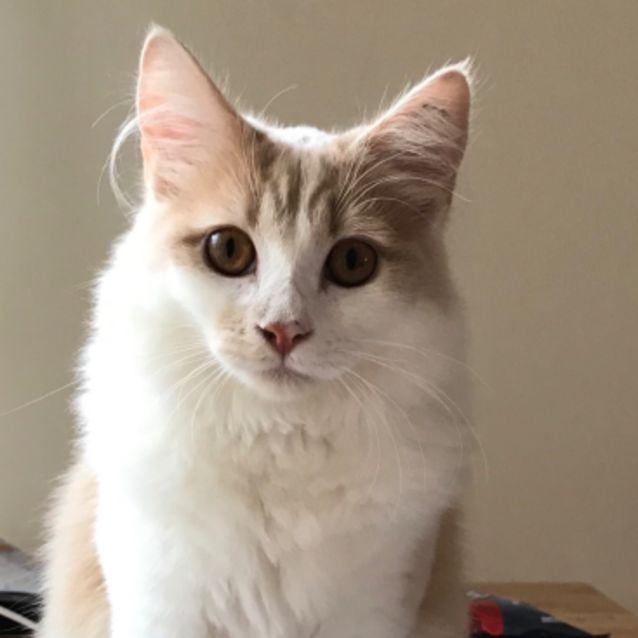 Photo of Sprout