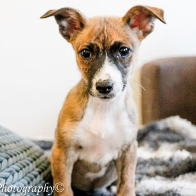 Photo of Suzy   Nd726 *Adoption Pending