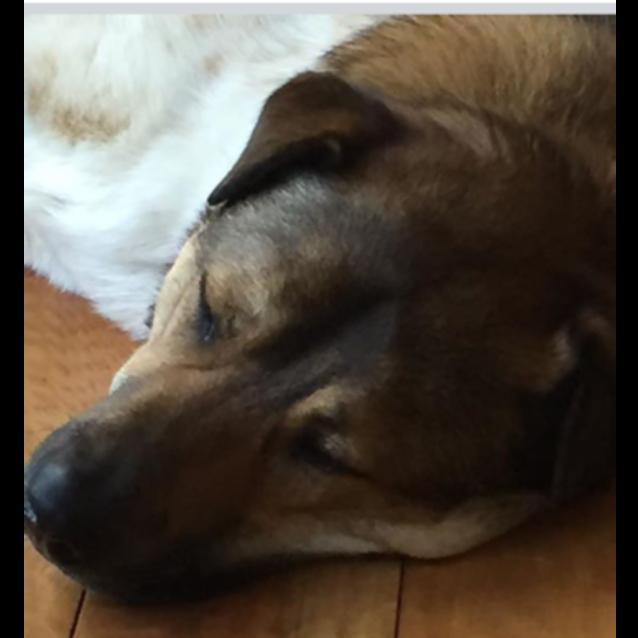 Photo of Sammy (On Adoption Trial)