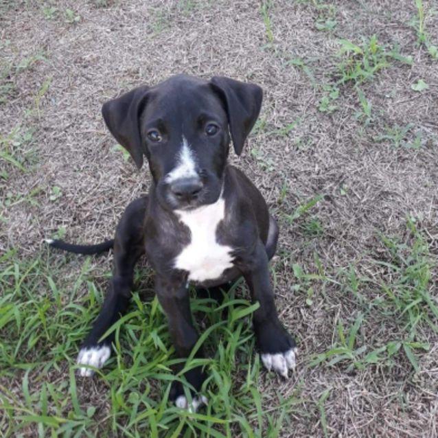 Photo of Rachel ~ Adoption Special $295 ~