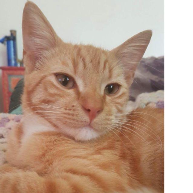Photo of Vernon