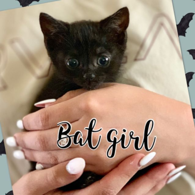 Photo of  Batty Cheeky Sweety!