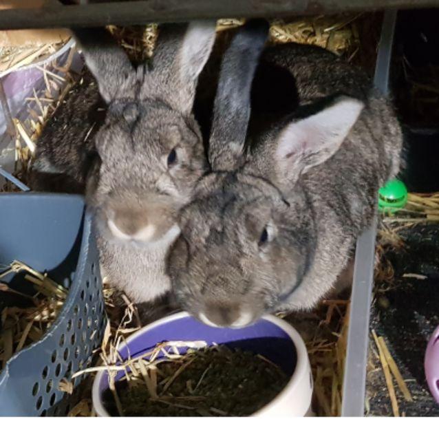Photo of Flopsy & Mopsy