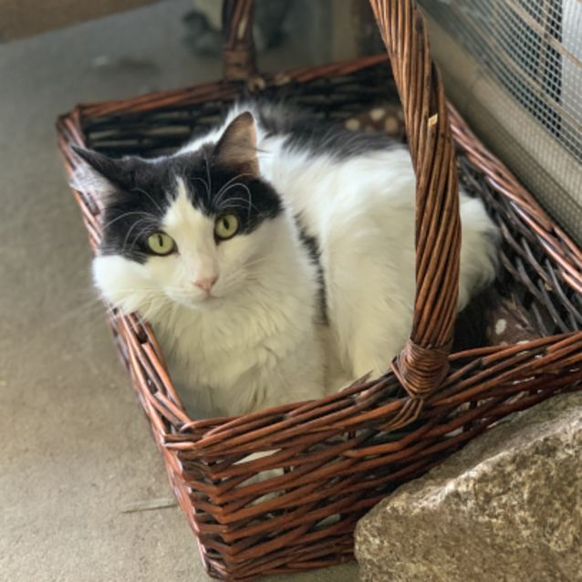 Photo of Fluffy Miss Feather   Foster Me Or Adopt Me!
