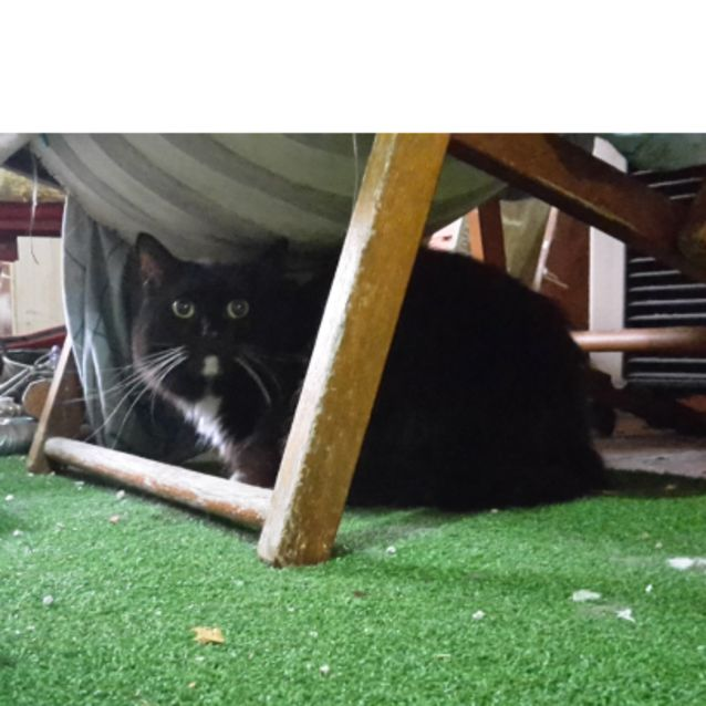Photo of Byron   Located In Lower Templestowe
