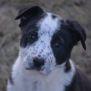 Photo of Magpie