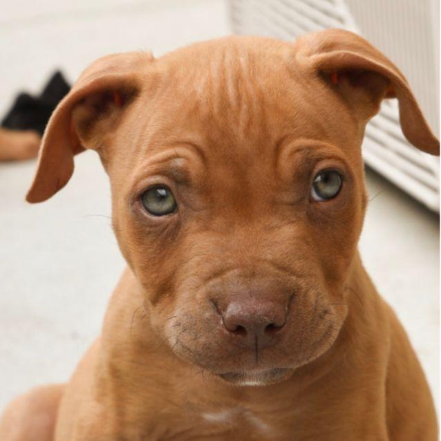 Photo of Lennox ~ Adoption Pending ~
