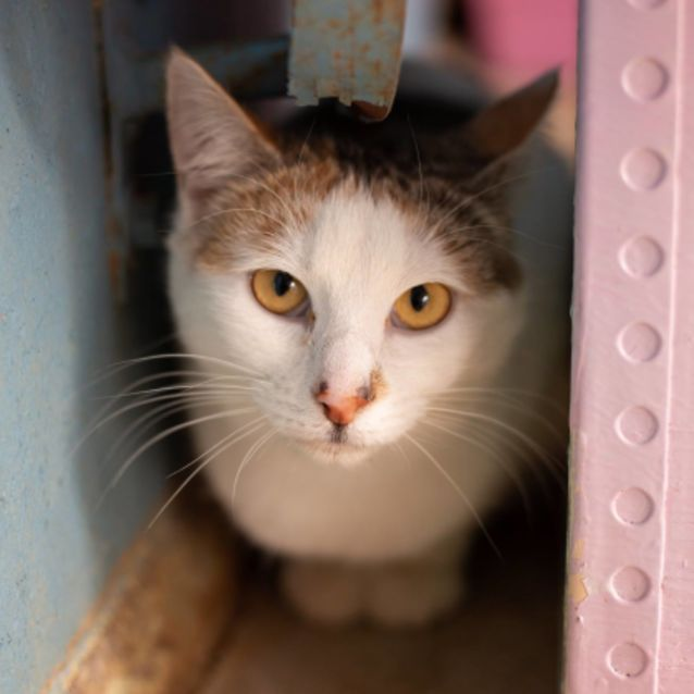 Photo of Pretty Princess Looking For A Quiet Home