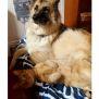 Photo of Loves Big Dogs! Banjo 🐾