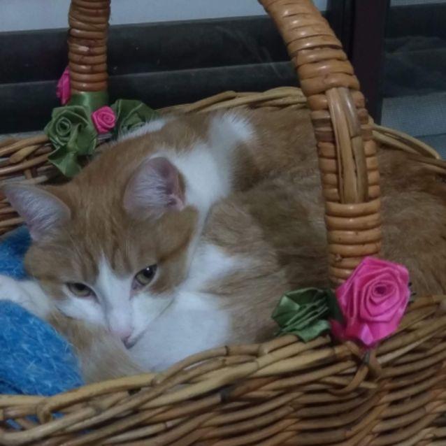 Photo of Castiel   Located In  Preston