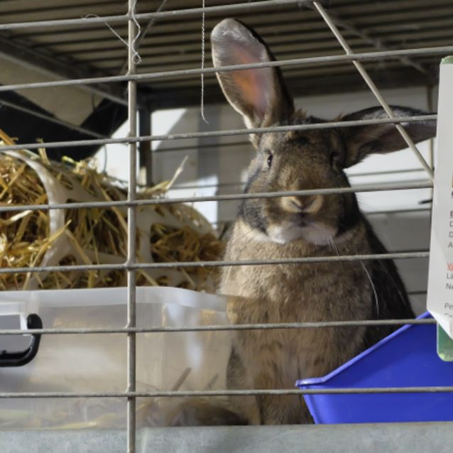 Photo of Cottontail