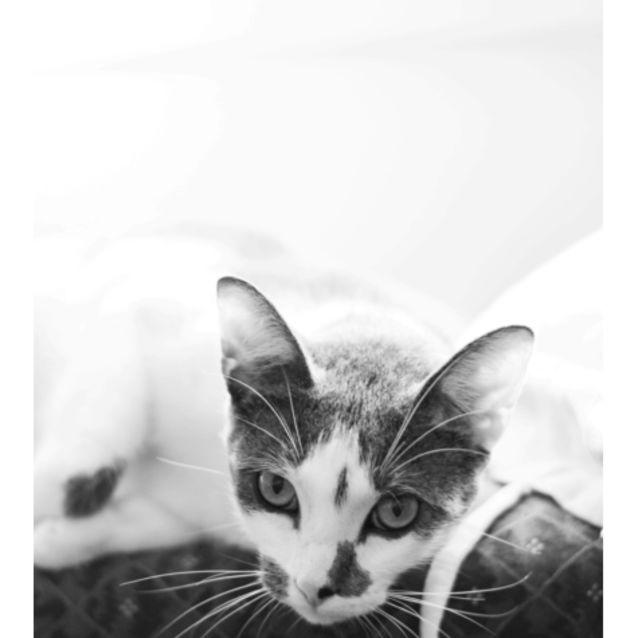 Photo of Rocky