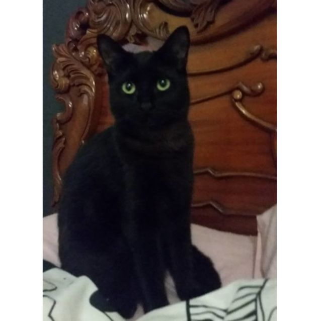 Photo of Toothless If050 16
