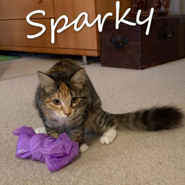Photo of Sparky   Located In Lower Templestowe