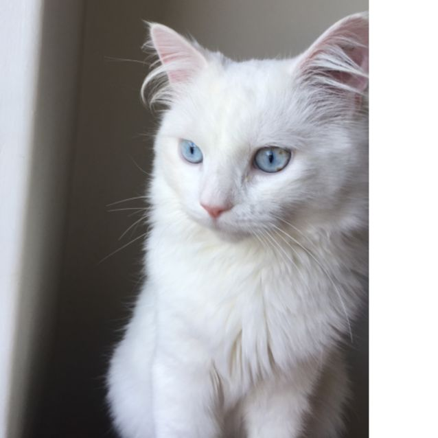 Photo of Moscato   Located In Fairfield