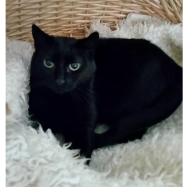 Photo of Kelly **2nd Chance Cat Rescue**