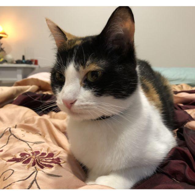 Photo of Maisie