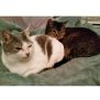 Photo of Molly And Lady   Special Needs Bonded Pair