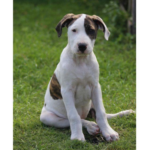Photo of Marla ~ Adoption Pending ~