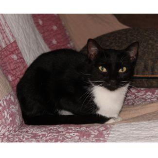 Zina **2nd Chance Cat Rescue**
