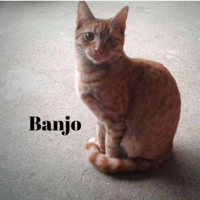 Photo of Handsome, Loving, Little Banjo!